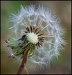 Natural History PDI 15/16